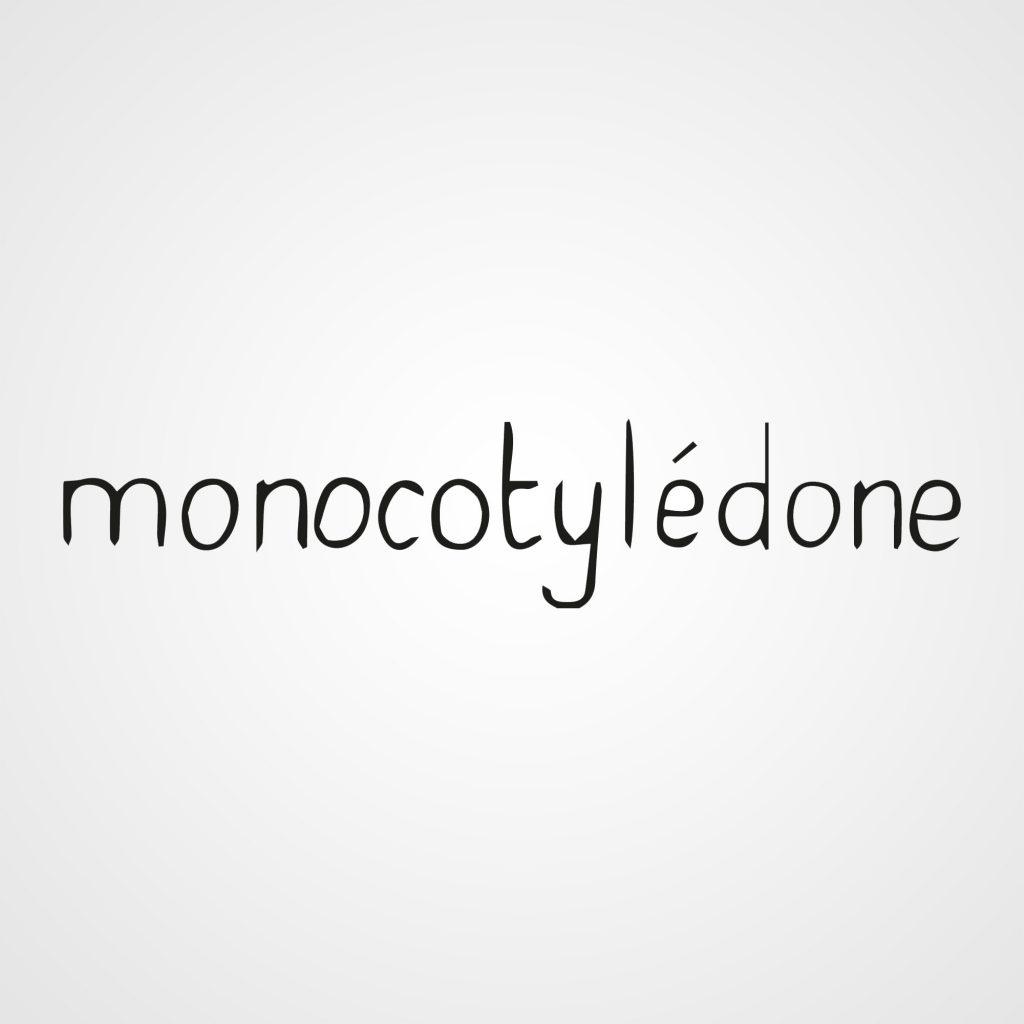 Monocotylédone