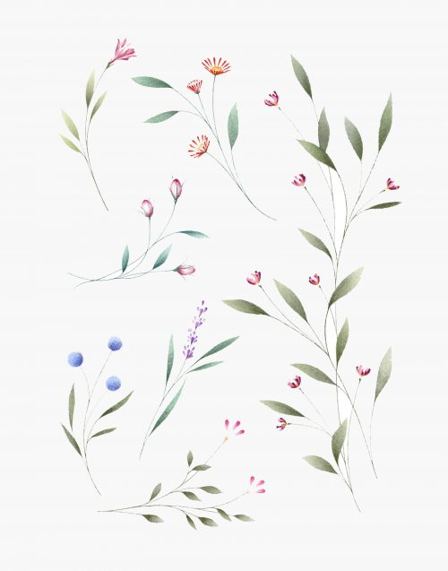 little wild flowers eva edelstein